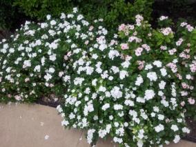 flower 20130702_183521